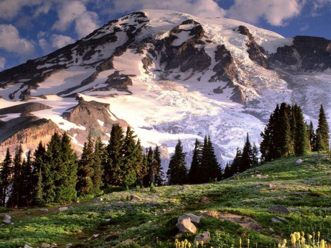 mountains landscapes nature trees Mount Rainier wildflowers wallpaper