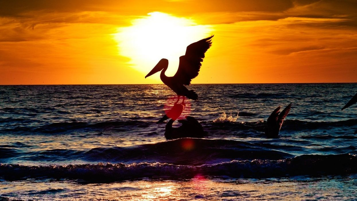 sunset birds sea wallpaper