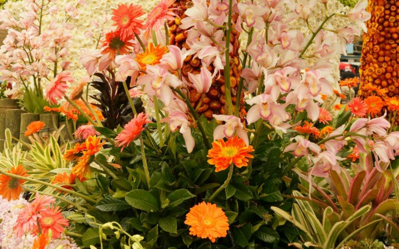 nature flowers plants wallpaper
