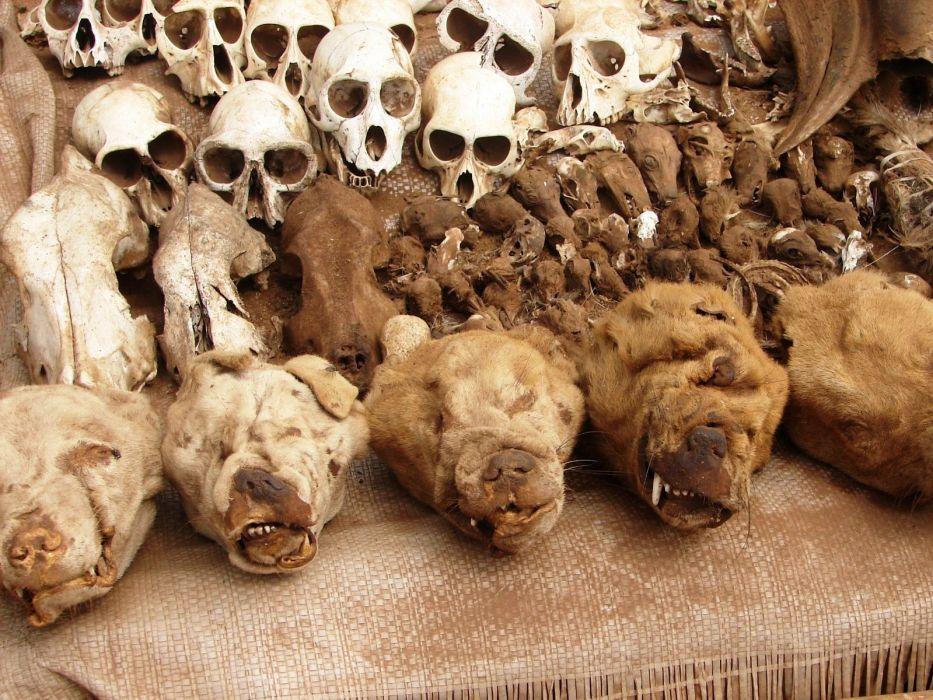 africa skull dark wallpaper