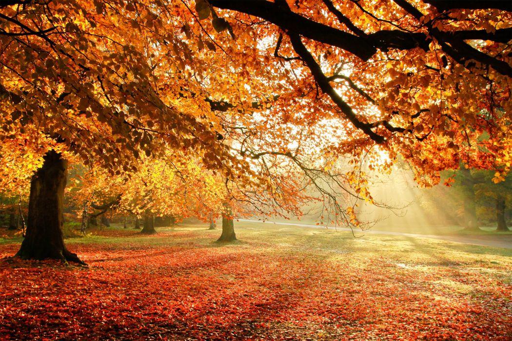 Autumn Trees Nature Light Foliage Wallpaper 1920x1280 281528 Wallpaperup