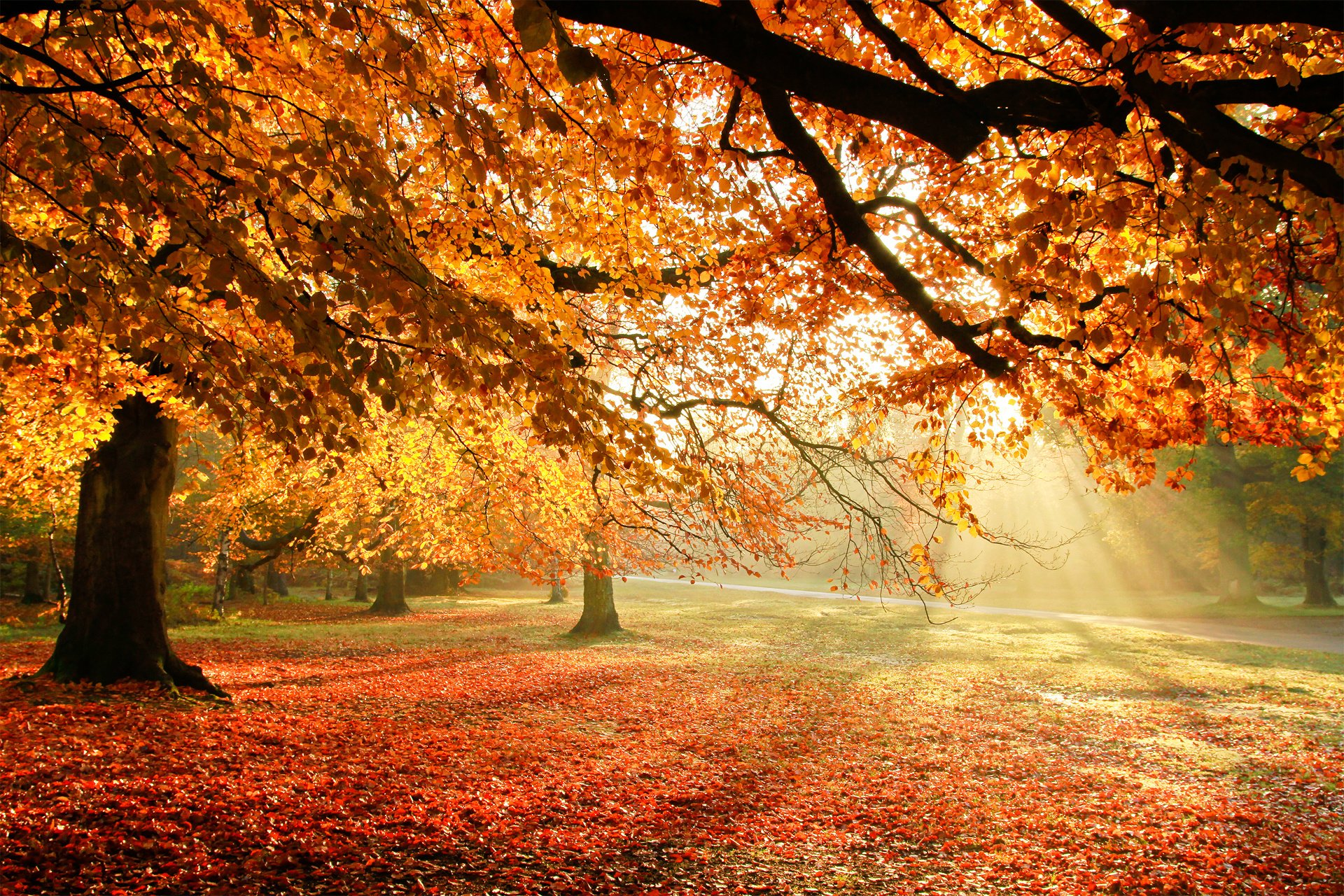 autumn trees nature light foliage wallpaper | 1920x1280 | 281528