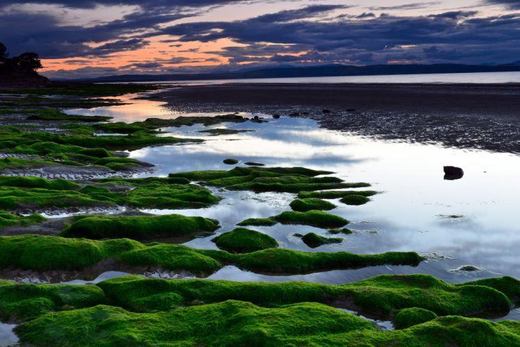 beach sea sunset water plants reflection wallpaper