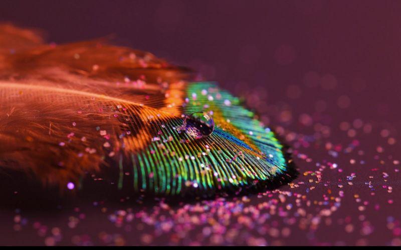 beautiful water drop feather macro beautiful water drop leaf macro wallpaper