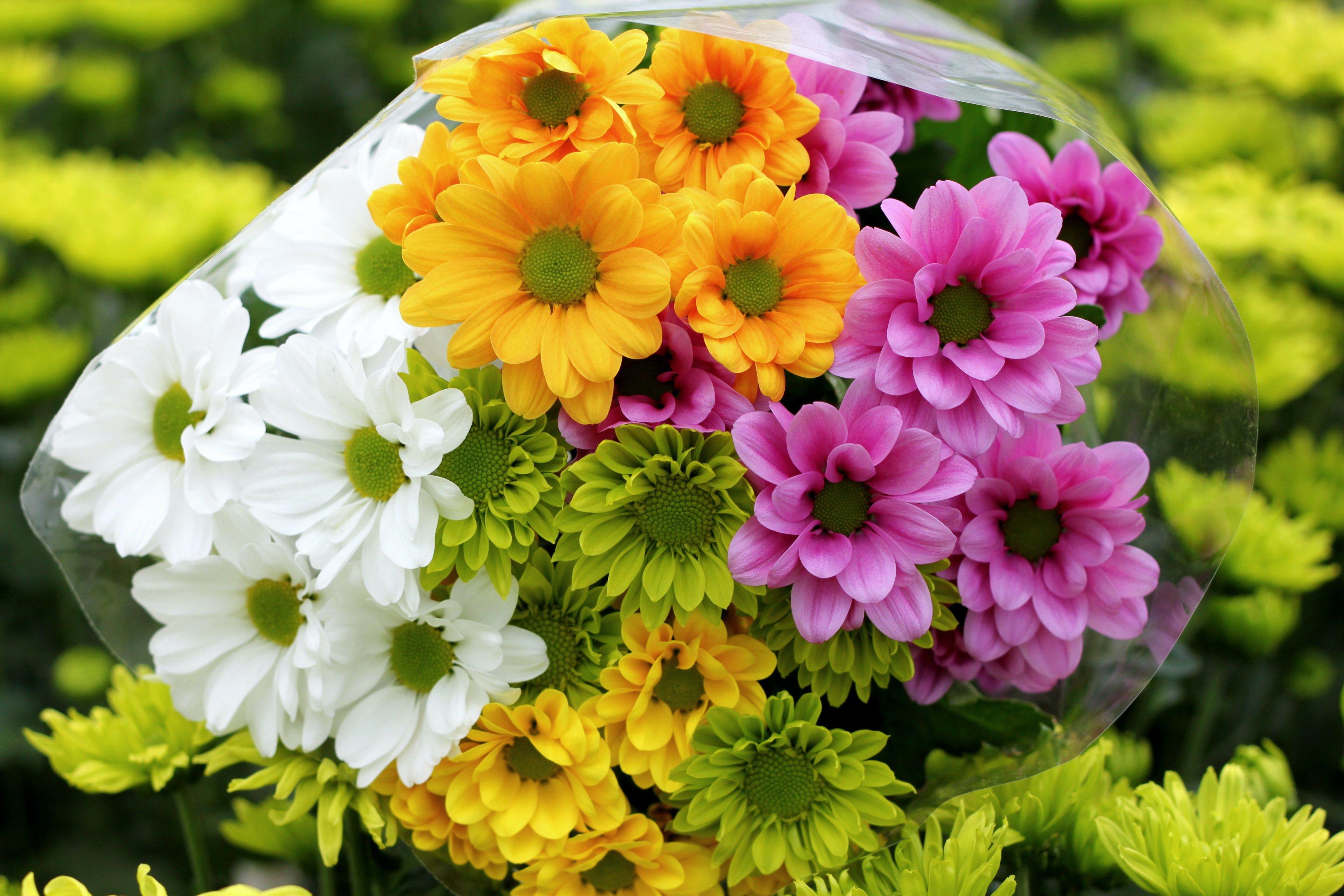 Цветы букеты хризантем