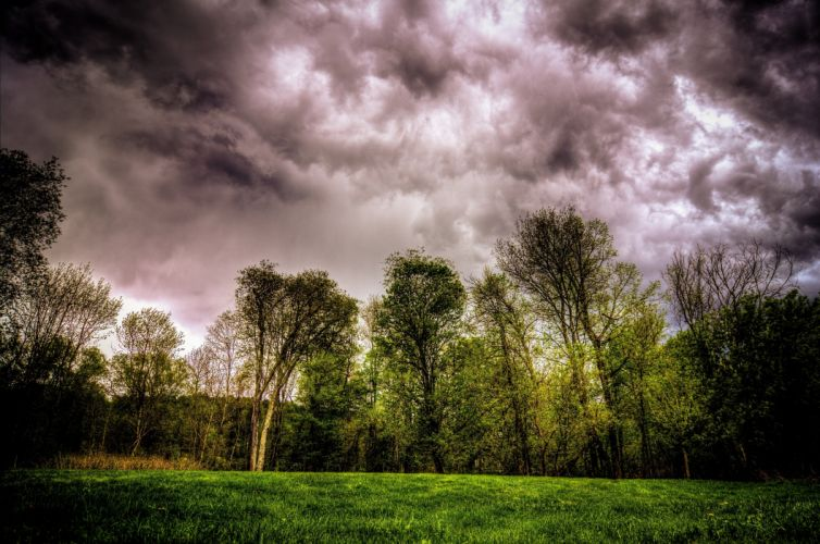 clouds trees forest wallpaper