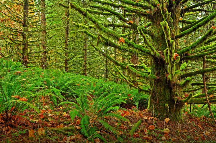 Eugene Oregon moshisty forest landscape moss fern wallpaper