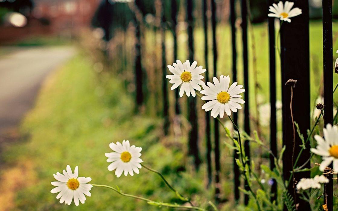 fence flower wallpaper
