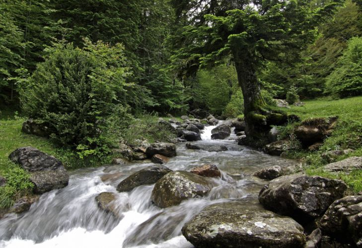forest river rocks landscape waterfall wallpaper