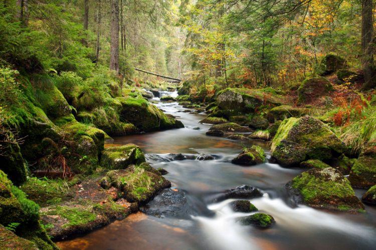 forest river trees landscape wallpaper