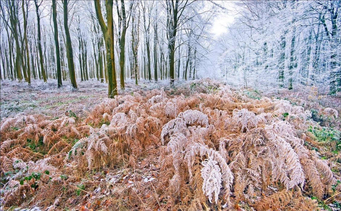 forest trees frost nature autumn wallpaper
