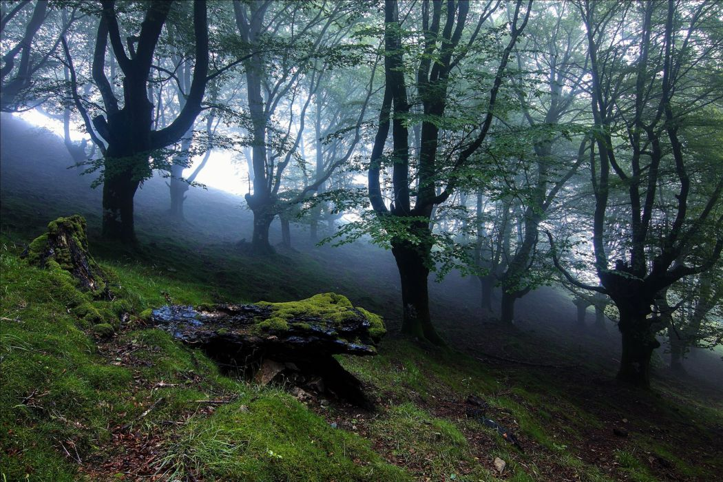 forest trees landscape mist fog wallpaper