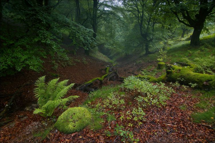 forest trees nature b wallpaper