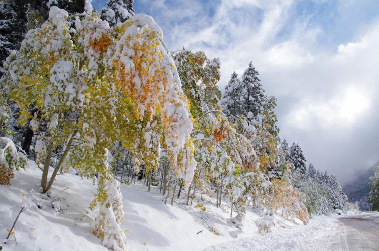 forest trees road landscape winter wallpaper