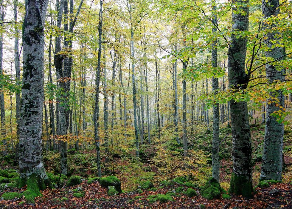 forest trees nature autumn wallpaper