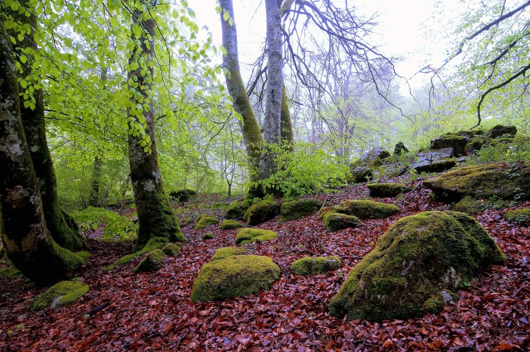 forest trees rocks nature wallpaper