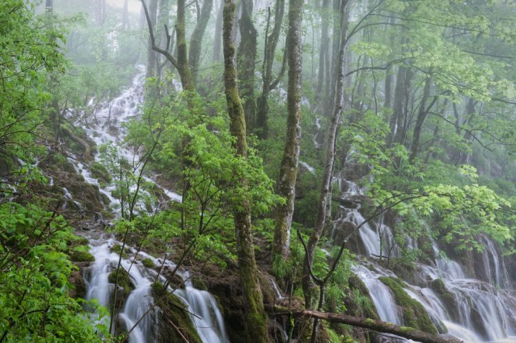 forest waterfall trees landscape wallpaper