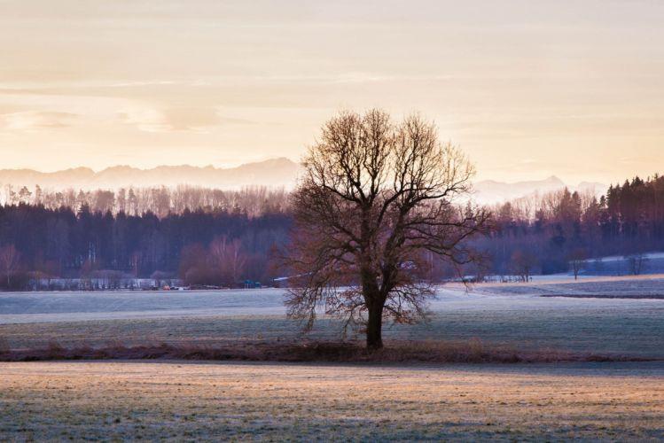 frost tree mountain field forest autumn wallpaper