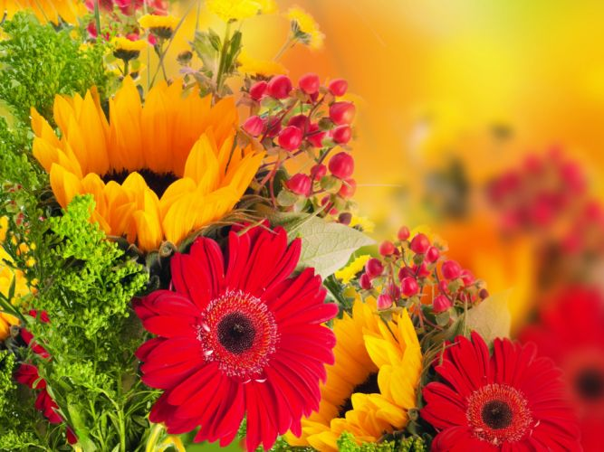 Gerberas Red Flowers d wallpaper