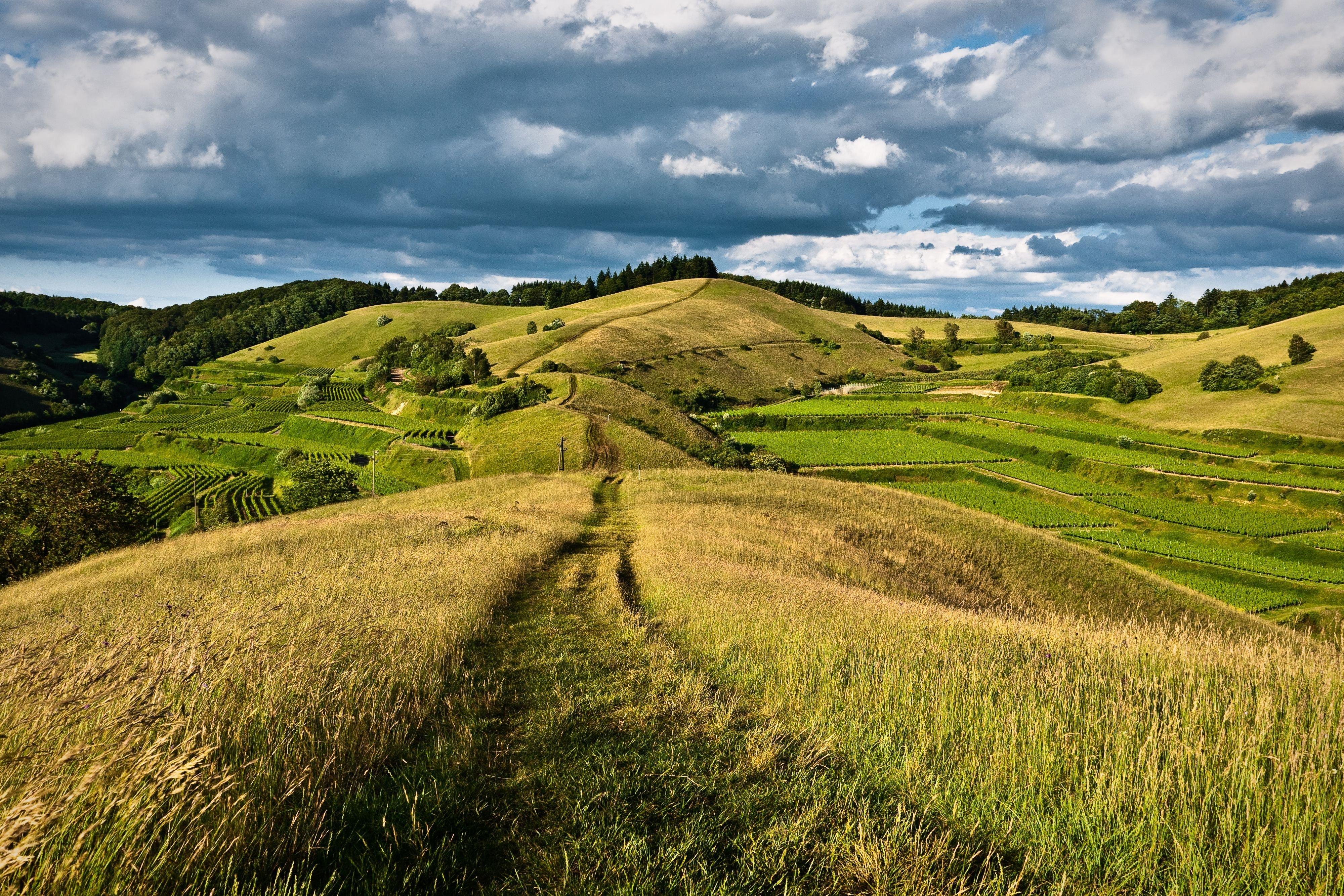 hills forest road landscape wallpaper