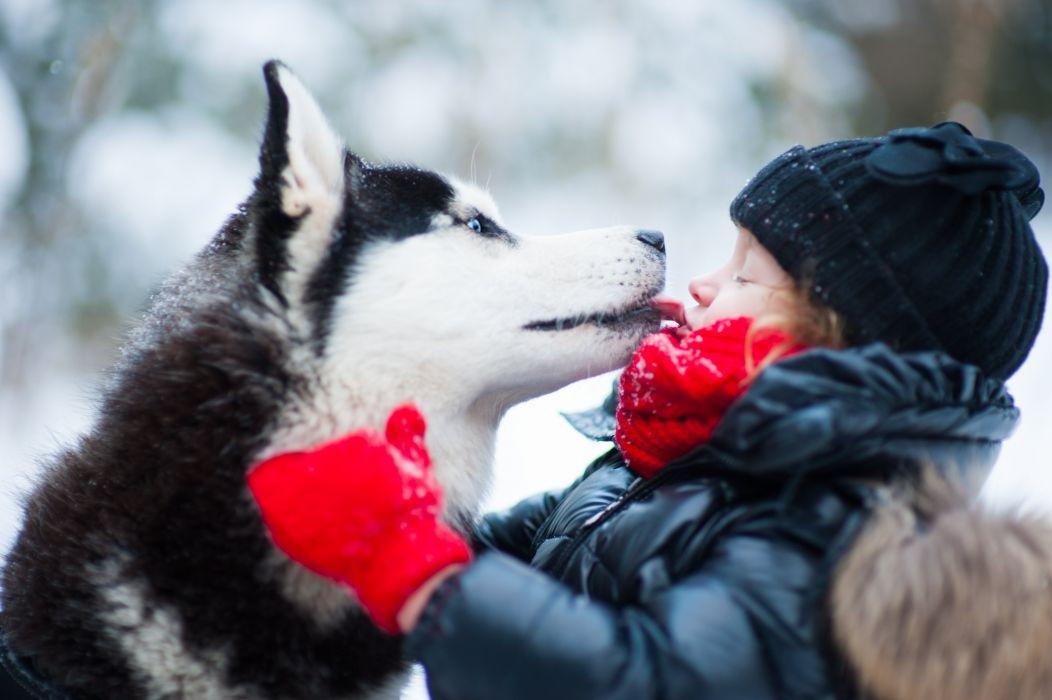 Husky winter dog child mood love wallpaper