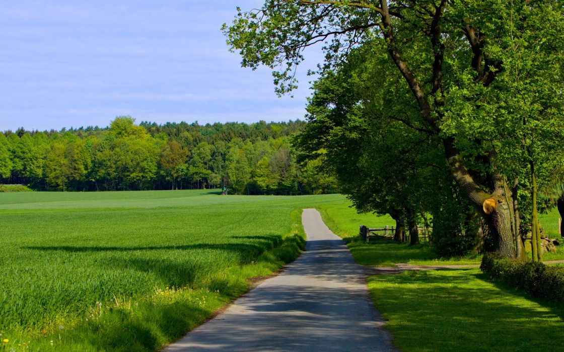 green nature trees grass paths roads wallpaper
