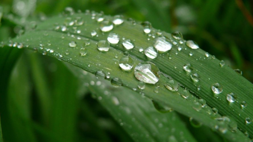 green water nature drop water drops wallpaper