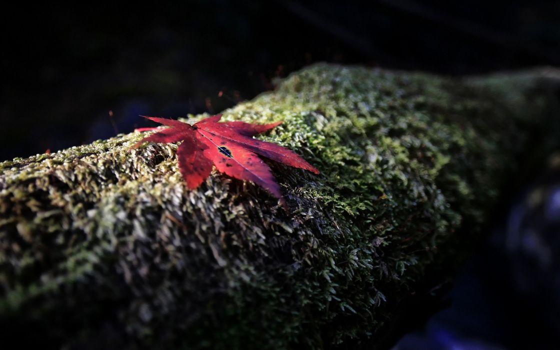 leaves moss wallpaper