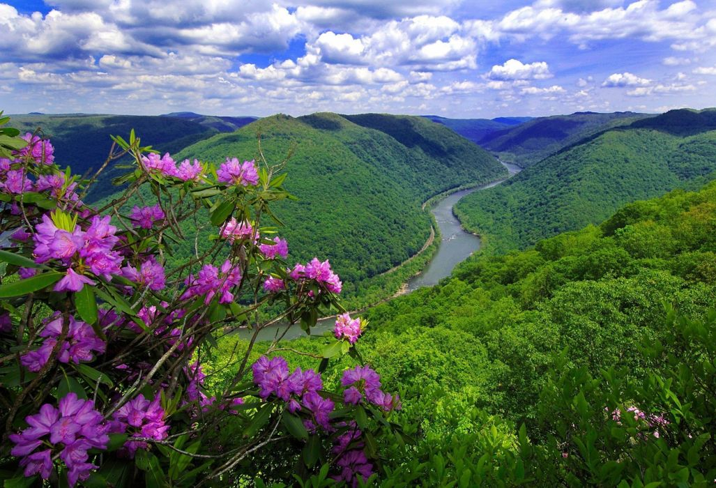nature river mountains flowers wallpaper