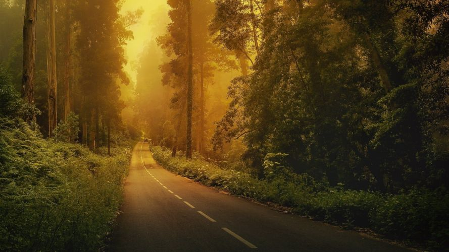 road marking forest car trees grass fog wallpaper