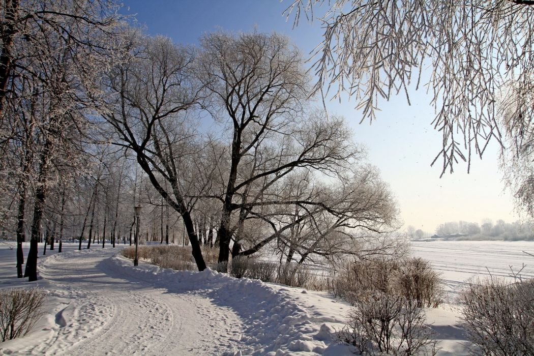 road snow trees winter nature wallpaper