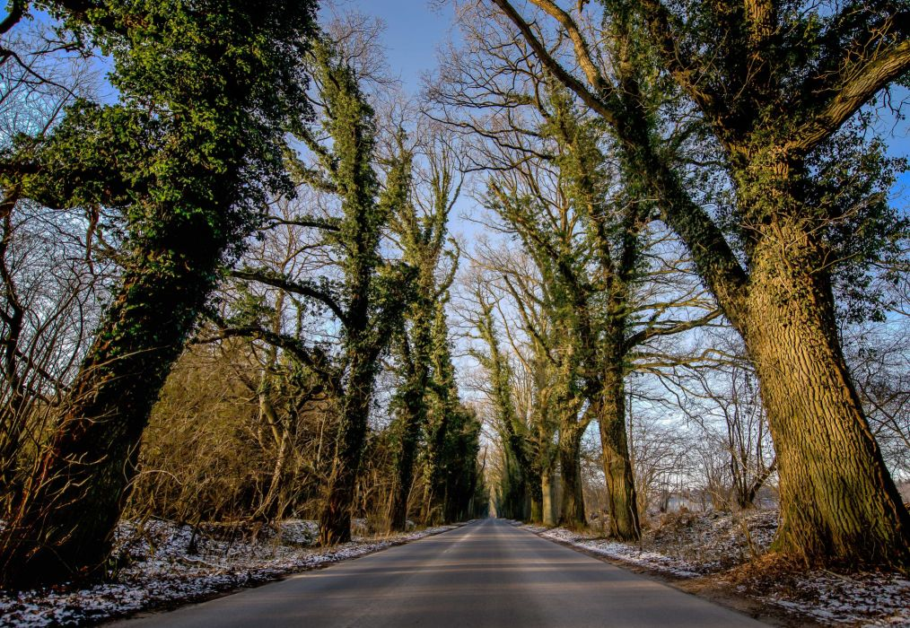 road trees landscape wallpaper