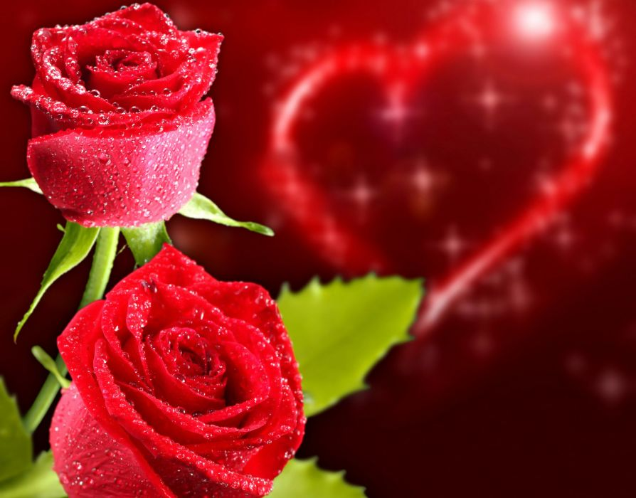Roses Closeup Holidays Heart Red Flowers wallpaper