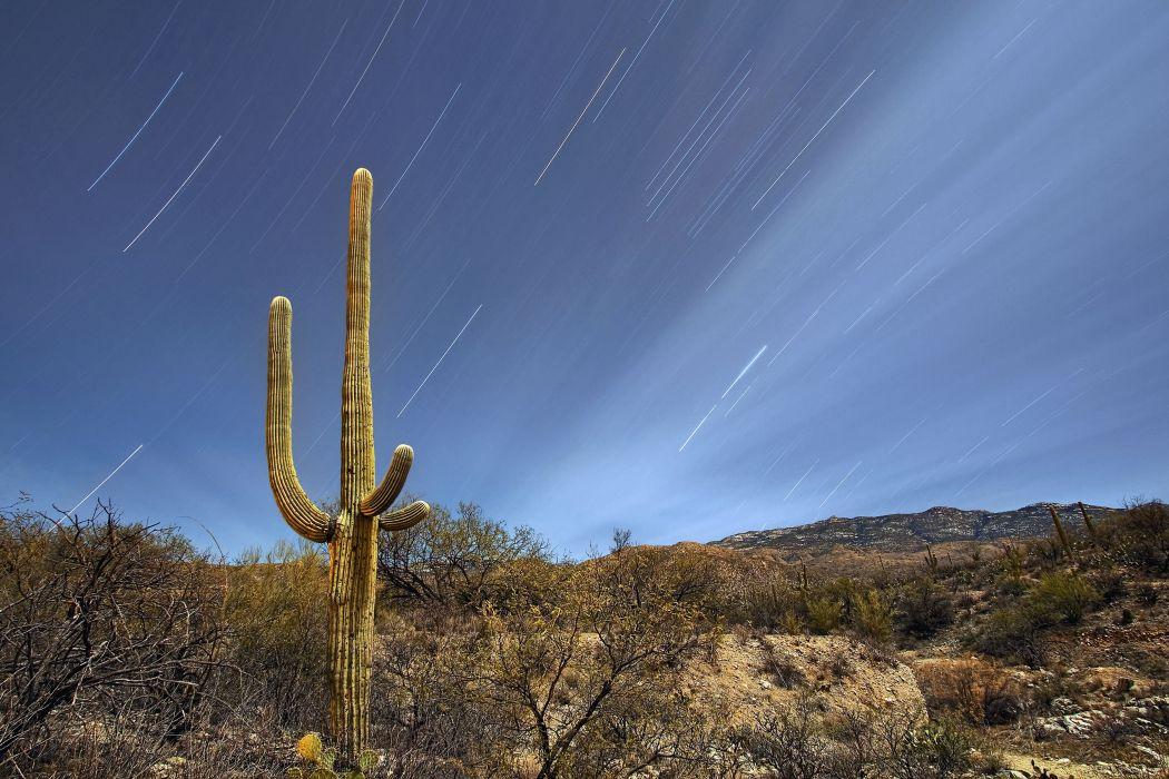 Saguaro National Park Tucson Arizona wallpaper