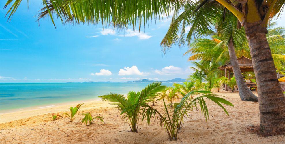 sand sea sky palm trees nature tropical landscape beautiful wallpaper