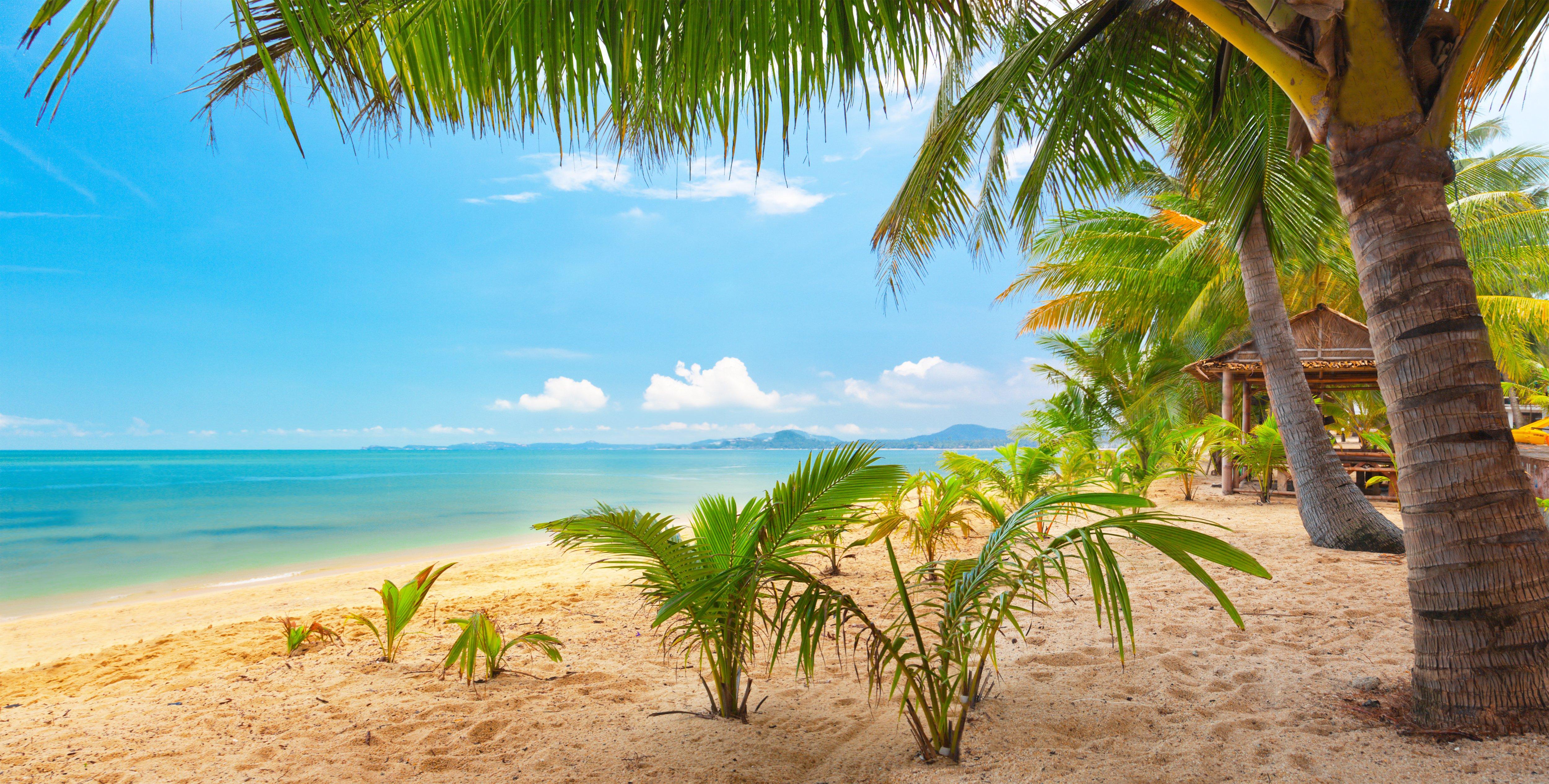Sand Sea Sky Palm Trees Nature Tropical Landscape Beautiful Wallpaper    5000x2532   282331   WallpaperUP