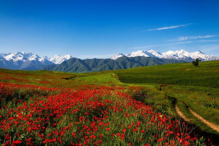 Scenery Mountains Fields Poppies Grass Trail Nature Flowers wallpaper