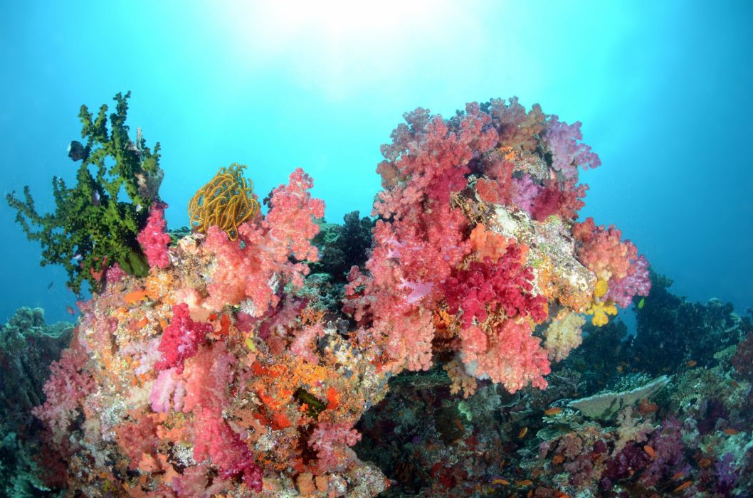 sea water coral fish fish underwater color ocean wallpaper