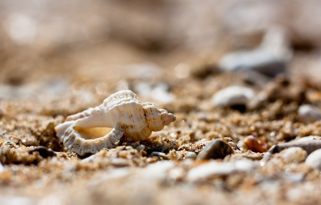 shell sand stones pebbles close-up macro beach wallpaper