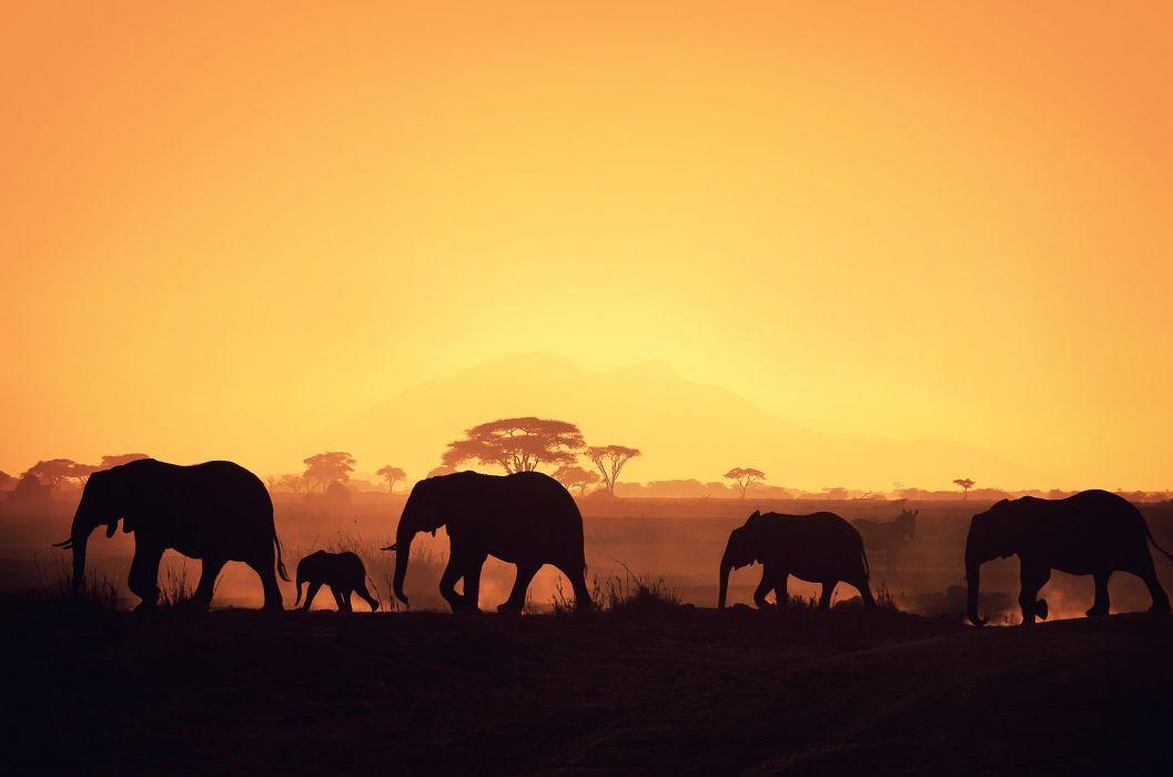 Solna silhouette elephant wallpaper