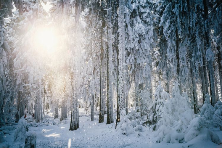 sun frost winter forest trees snow wallpaper