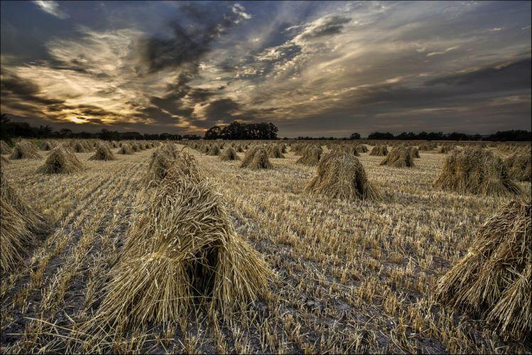 sunset field sheaves landscape autumn grass wheat wallpaper