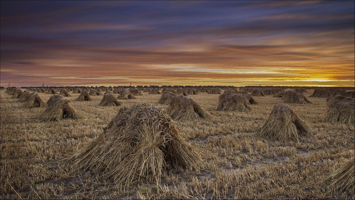 sunset field sheaves landscape autumn grass wheat      h wallpaper