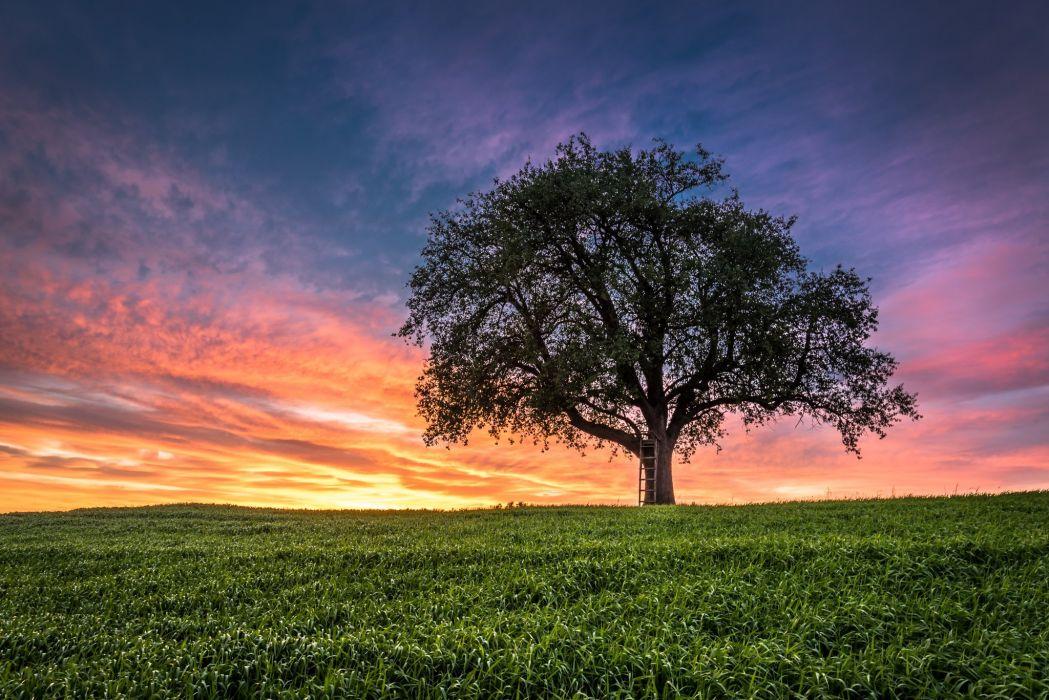 sunset field tree landscape wallpaper