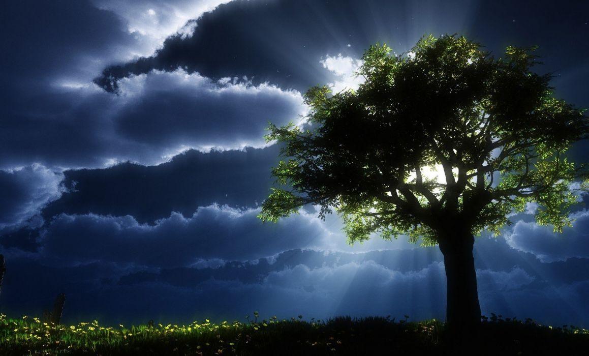 tree clouds grass light evening wallpaper