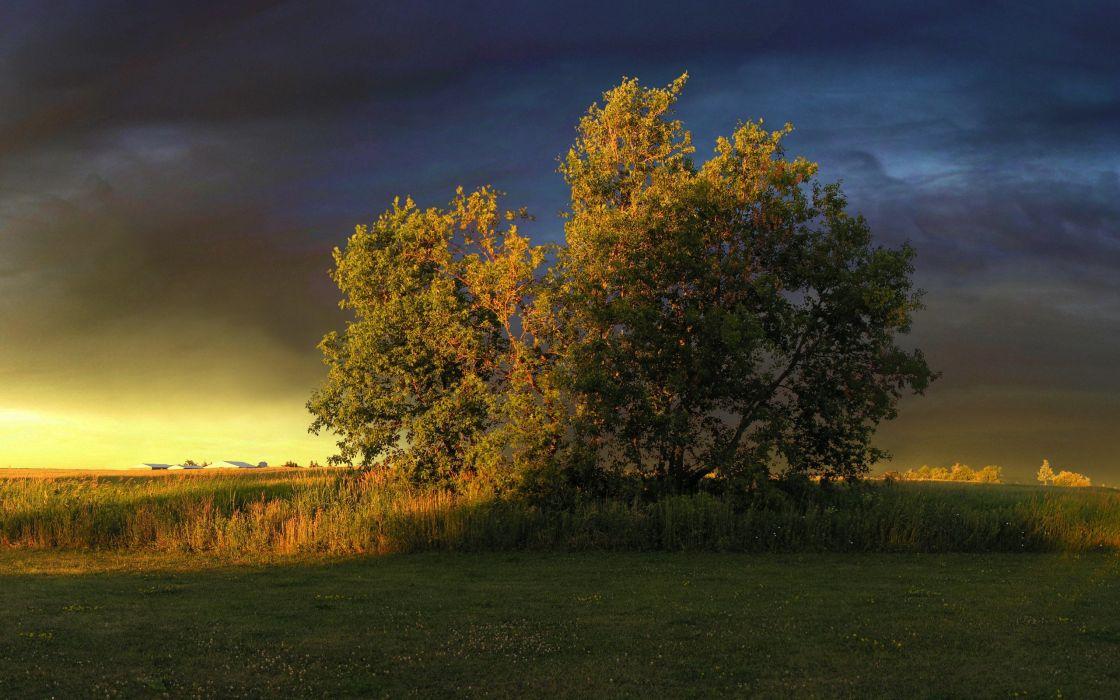 tree clouds grass light wallpaper