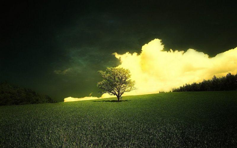 tree clouds grass sky d wallpaper