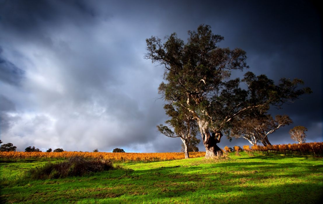 tree clouds grass sky wallpaper