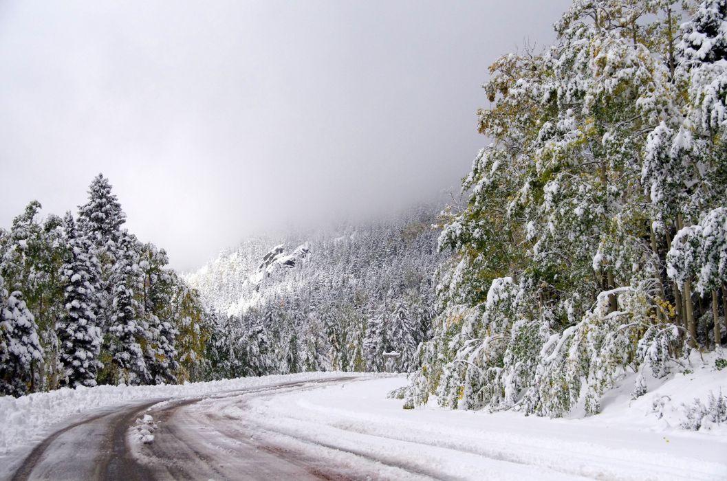 trees forest road fog landscape winter wallpaper