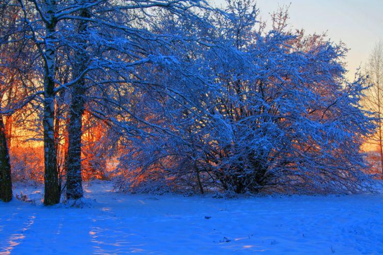 trees winter sunrise sunset snow wallpaper